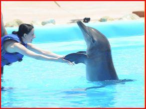 Dolphinarium à proximité